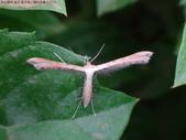 復旦-新天母公園的昆蟲2017/9:DSC05960.JPG