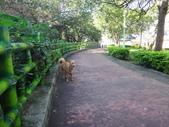 愛犬再次失蹤一天一夜:DSC09554.JPG