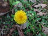 復旦三月花朵:DSC02582.JPG