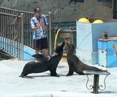 哺乳綱 (貂科、熊科、蝙蝠、松鼠、袋鼠、海豚、鯨魚、海獅):海獅接吻.JPG