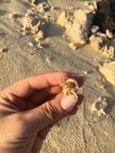 馬爾地夫-瑞僖敦渡假村的生物:1060713橘黃色寄居蟹.jpg