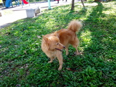 愛犬再次失蹤一天一夜:DSC09647.JPG