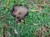野菇蕈-復旦109~110年:DSC09578.JPG