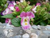草本類植物:P2070478.JPG
