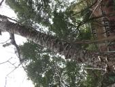 野菇蕈-復旦109~110年:DSC05381山櫻花樹幹.JPG