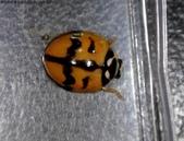 復旦-新天母公園的昆蟲107/1:DSC00089.JPG