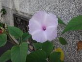 107~108年,復旦社區新的花草:DSC05693.JPG