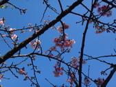 文化公園(原復旦公園)賞櫻花與小紅果:DSC01788.JPG