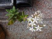 109年,復旦社區新的花草樹木:DSC03134.JPG
