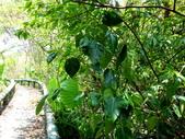 雙溪-老農夫生態農莊及虎豹潭的植物:DSC03549.JPG