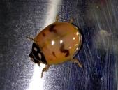 復旦-新天母公園的昆蟲107/1:DSC00062.JPG