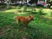 愛犬再次失蹤一天一夜:DSC00033.JPG