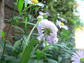 菊科植物:P2110365