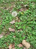 菊科植物:P1950037