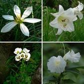 驚豔的花朵(白色系):相簿封面