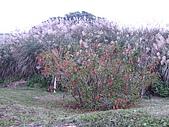 2009亂拍:八里左岸