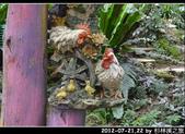 2012-07-21,22 by 杉林溪之旅:20120721-22 杉林溪05.jpg