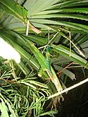 2010-10-08~10 綠島之旅:DSC04553.jpg