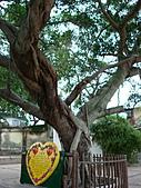 地理考察 2008-01-28:心願樹