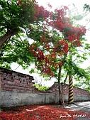 090927小琉球行DAY3:開得火紅的鳳凰樹