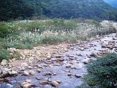 081130花漾秋芒之草嶺古道健行:CIMG0247.JPG
