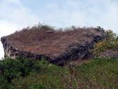 990227小硫球990307烏樹林蘭展:厚石裙礁F6.jpg