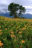 20110907-09金針花(六十石山,赤科山):1010907六石石山19.jpg