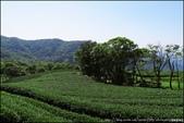 『 三峽。熊空茶園 』一座茶園想表達陽光、尋茶、森呼吸的概念:IMG_6290.JPG
