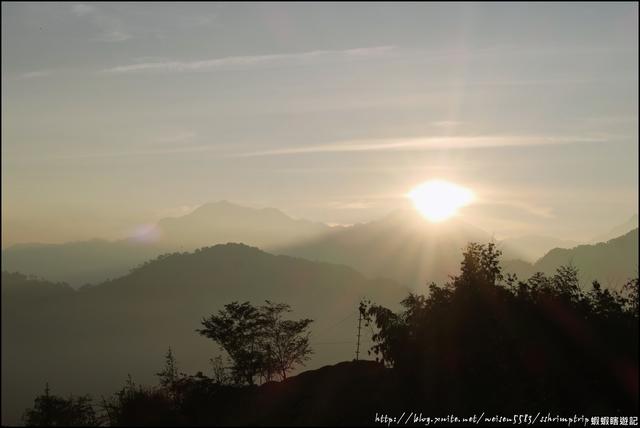 『 鹿谷。大崙山瞭望平台x銀杏森林 』日出日落。雲海。茶園&銀杏林。超推薦景點: