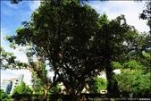 『 士林。至德園 』賞蓮去。故宮旁的小小秘境花園: