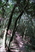 『 三峽。鳶山 』網友推薦賞夜景的最佳景點:IMG_9323.JPG
