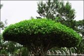 『 桃園。南崁溪自行車道&虎頭山環保公園 』水岸單車遊&上山吹風看風景:IMG_8151.JPG