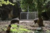 『 台北文山。台北市立動物園 』大小朋友都愛來。花1天時間也走不完的動物園: