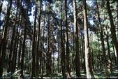 『 三峽。熊空茶園 』一座茶園想表達陽光、尋茶、森呼吸的概念:IMG_6184.JPG