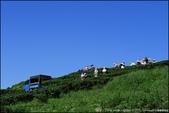『 三峽。熊空茶園 』一座茶園想表達陽光、尋茶、森呼吸的概念:IMG_6338.JPG
