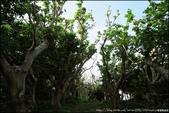 『 沖繩。玉城城跡 』風光明媚。一種來到天然碉堡的感受:
