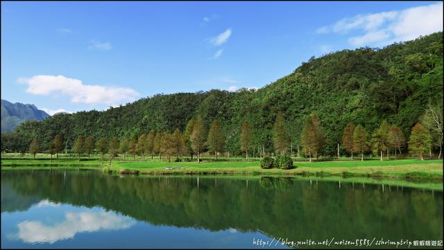 『 員山。蜊埤湖 』落羽松祕境。迷人的湖光倒影: