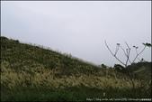 『 樹林。大同山 』秋芒芒的樹林後花園: