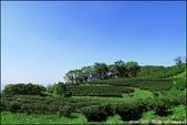 『 三峽。熊空茶園 』一座茶園想表達陽光、尋茶、森呼吸的概念:IMG_6274.JPG