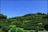 『 三峽。熊空茶園 』一座茶園想表達陽光、尋茶、森呼吸的概念:IMG_6228.JPG