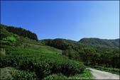 『 三峽。熊空茶園 』一座茶園想表達陽光、尋茶、森呼吸的概念:IMG_6315.JPG
