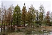 『 后里。落羽松秘境x泰安國小情人樹x泰安新舊火車站 』寧靜的美麗。秋意濃的泰安印象: