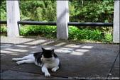 『 瑞芳。侯硐 』貓與礦坑PART II:IMG_8597.JPG