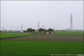 『 埤頭。埤頭木棉花道 』季節限定。彰化三大木棉花道之一: