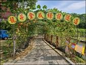 『 造橋。龍昇湖&龍昇金瓜綠龍隧道 』期間限定。湖畔旁必拍的南瓜隧道:
