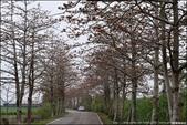 『 二林。二林木棉花道 』季節限定。彰化三大木棉花道之一:
