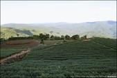 『 坪林。南山寺 』再訪南山寺PART II。拍拍坪林地區的茶園風光: