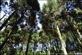 『 三峽。熊空茶園 』一座茶園想表達陽光、尋茶、森呼吸的概念:IMG_6188.JPG