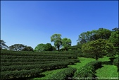 『 三峽。熊空茶園 』一座茶園想表達陽光、尋茶、森呼吸的概念:IMG_6237.JPG