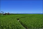 『 豐濱。新社梯田 』稻米半熟時。青綠梯田與太平洋連成一線的絕美風情新社梯田: